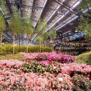 Floralies gantoises avec les Voyages Degrève
